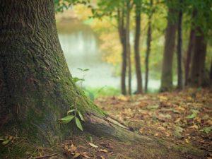 Mindfulness med skogsbad